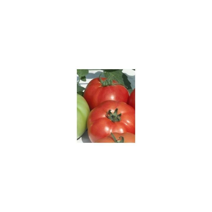 Seminte de tomate Reyana F1, 10 gr