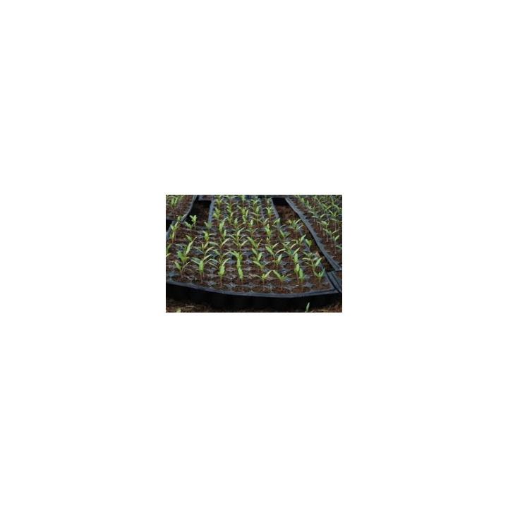 Turba rasaduri pentru micii gradinari (20 litri)