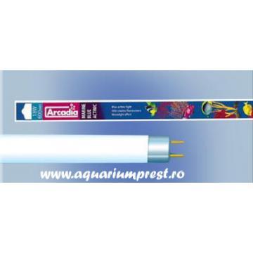 Neon acvariu Arcadia Marine Blue 420 Actinic Lamp T8 30W