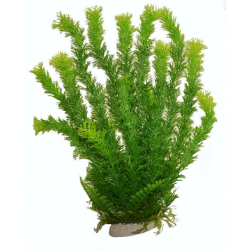 Planta acvariu Ceratophillum verde PP312 36cm