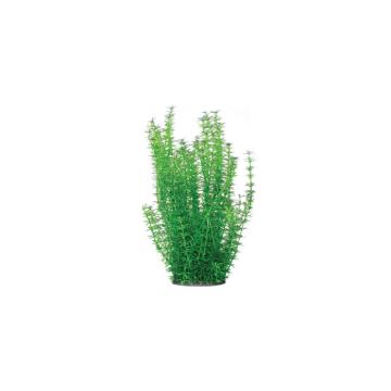Planta acvariu Egeria Densa PP309 26cm