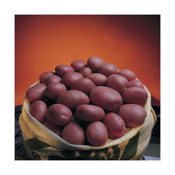 Cartofi albi si rosii ambalati la 10 kg si 25 kg
