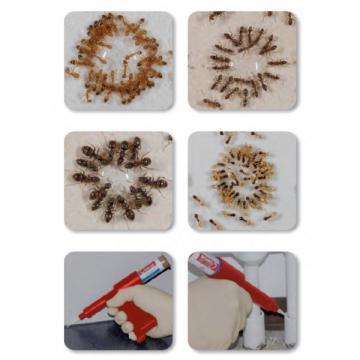 Insecticid combaterea furnicilor Granulat Maxforce Quantum
