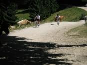 Mountain bike Predeal