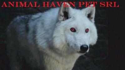 animal heaven pet