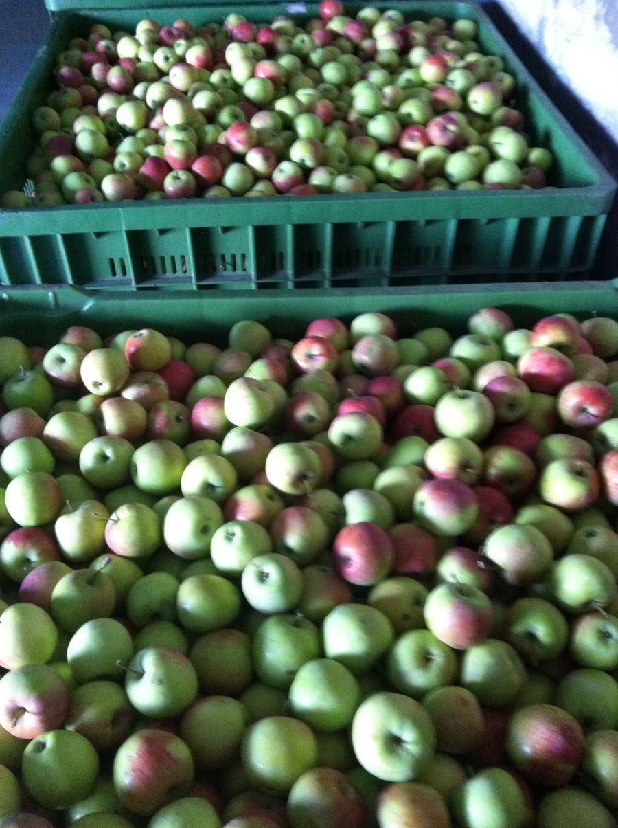 Fabricare si imbuteliere suc de mere