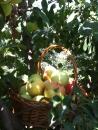Vanzari mere ecologice