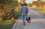 Plimbare caini Bucuresti