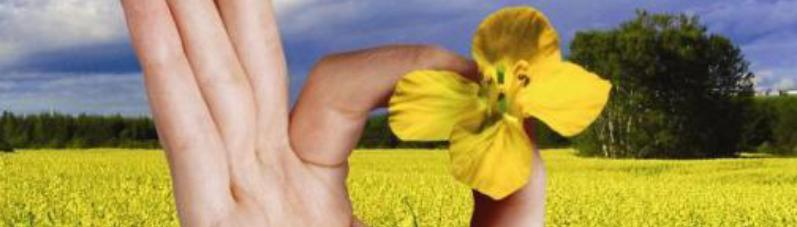 Seminte oleaginoase