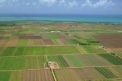 Arendare si cumparare terenuri arabile Constanta