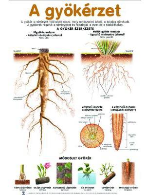 Planse botanica