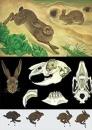 Planse zoologie