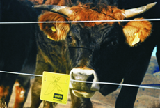 Gard electric animale